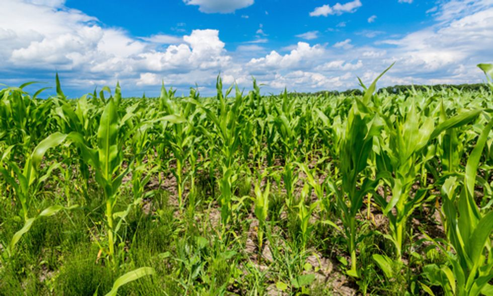 Environmental Groups Fear EPA Could Approve Dow Pesticide for GMO Crops