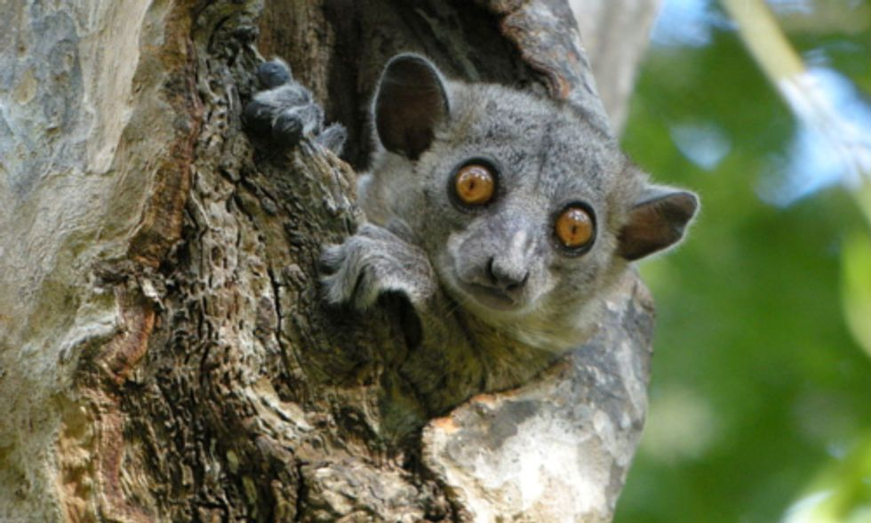 85% of World's Endangered Species Are Not Protected in Existing Refuges