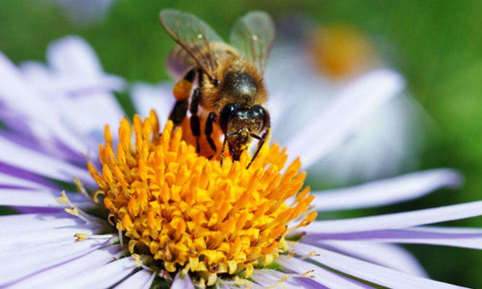 Save the Bees, Ban Neonic Pesticides