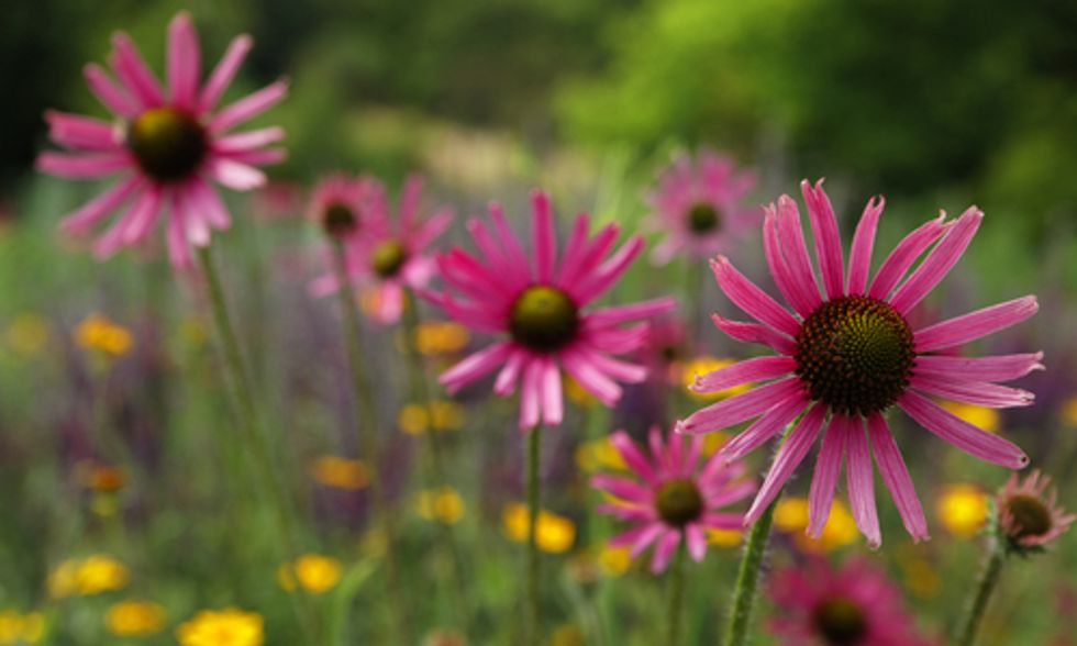 The Why, What and How of Rain Gardens