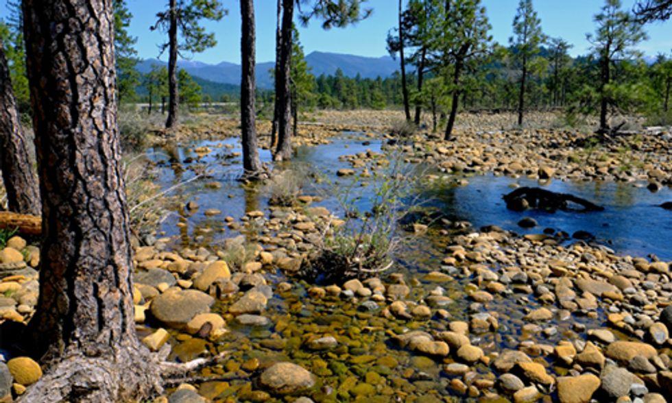 Cherished Redwood Region Threatened by Nickel Mines