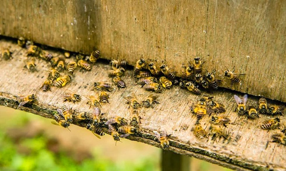 Approval of Bee-Killing Pesticides Challenged in Court