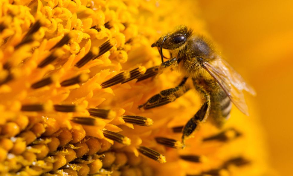 How the EPA's Inaction on Bee-Killing Neonicotinoids Cripples Our Economy