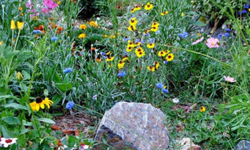 Xeriscape Your Yard