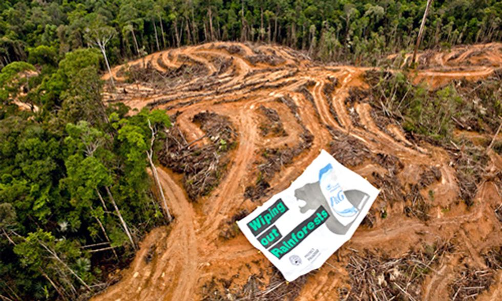 How Palm Oil Ravages Rainforests, Endangers Wildlife and Destroys Communities