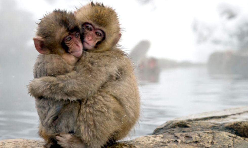 Study Suggests Link Between Fukushima Radiation and Japanese Monkeys' Low Blood Count