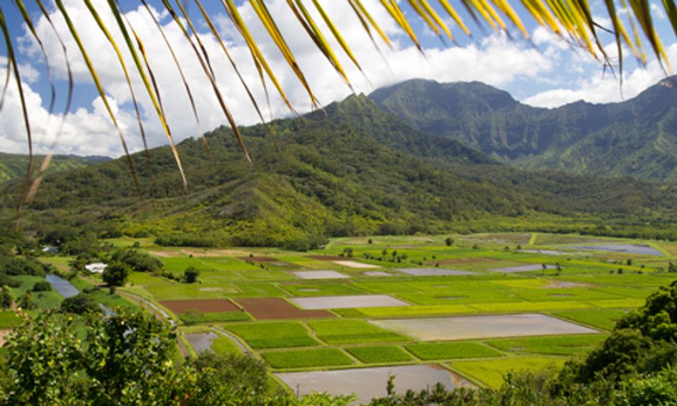 Fight Continues Over Moratorium of GMO Crops on Hawaii's Big Island