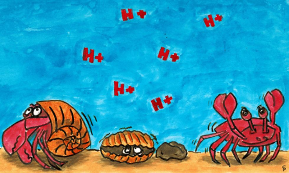 Increase in Ocean Acidification Threatens Longevity of Shellfish and Coral