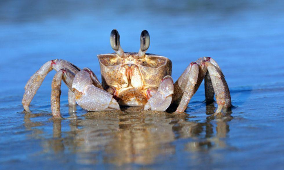 NOAA: Ocean Acidification Rises, Marine Economy Sinks