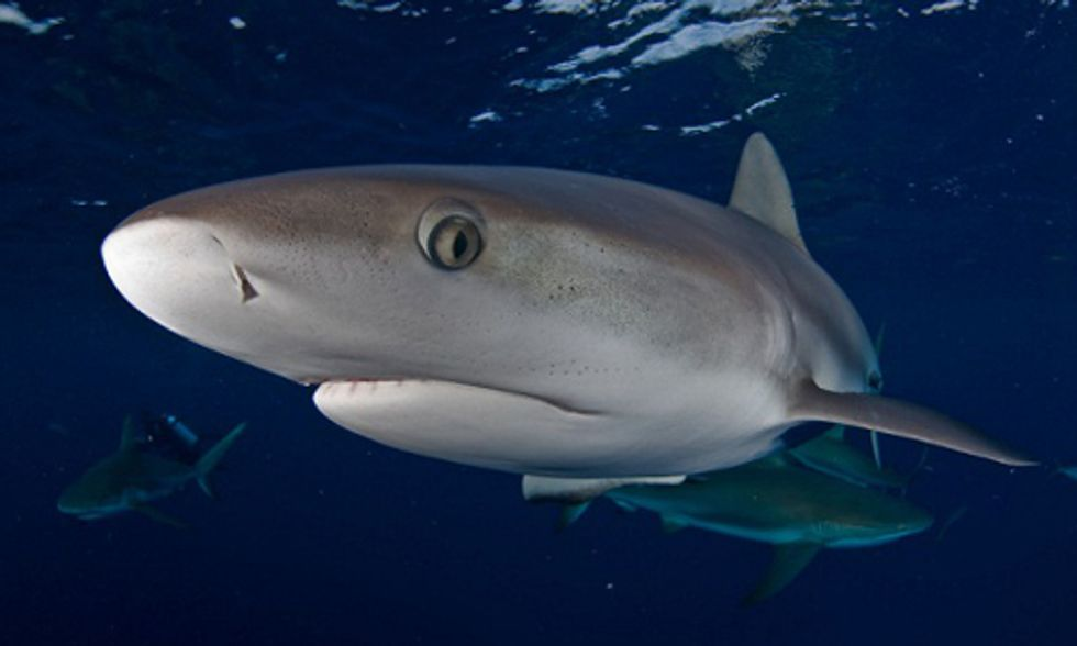 10 Surprising Facts About Sharks