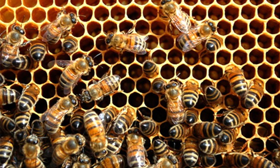 California Legislature Delays Crucial Honeybee Protections
