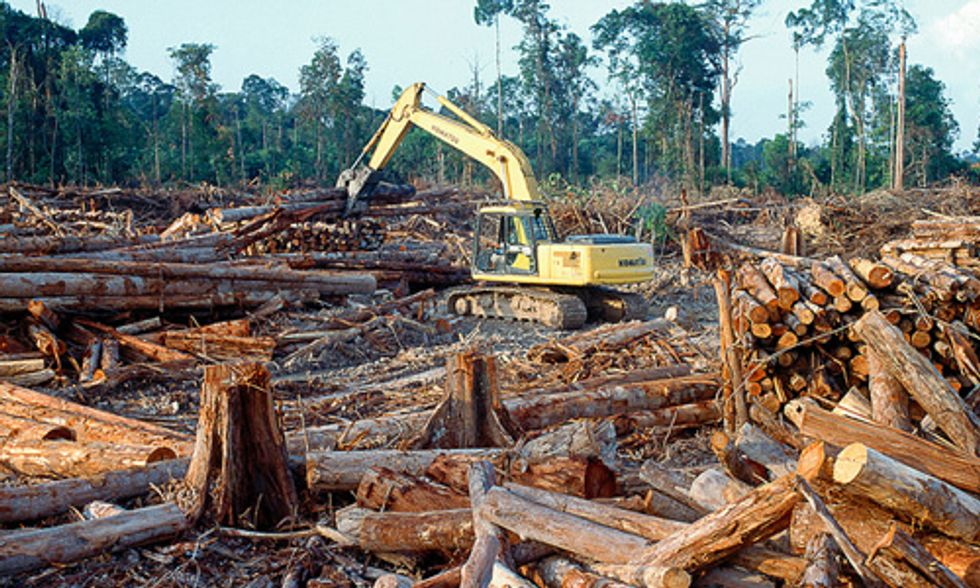 World's Endangered Forests Need Your Help