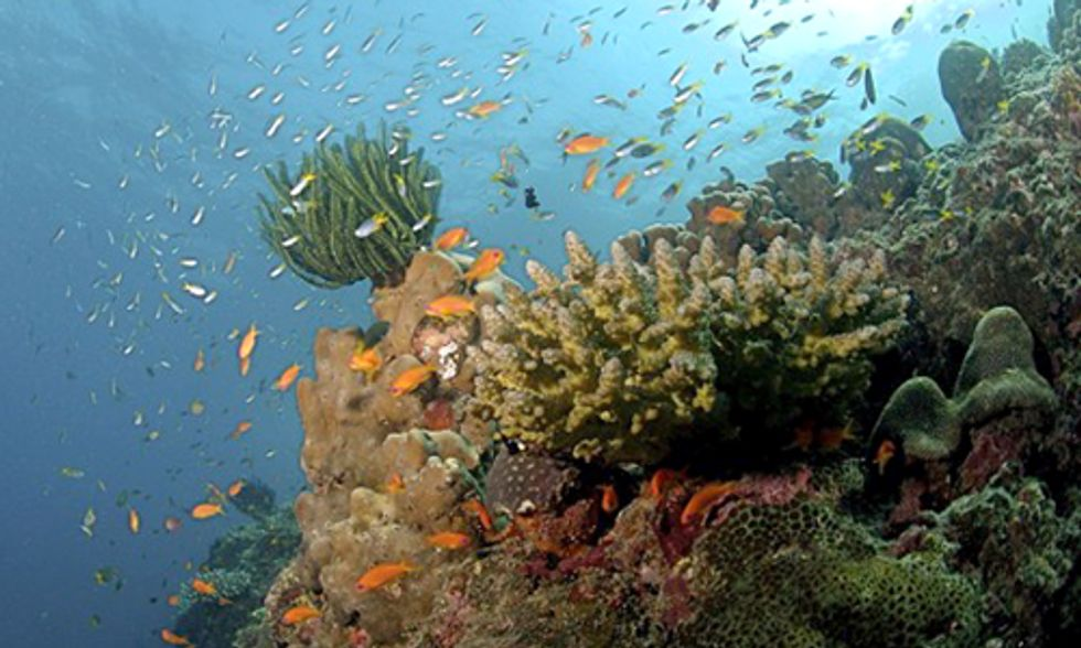 World Meteorological Organization: Ocean Acidification and Greenhouse Gas Emissions Hit Record Levels