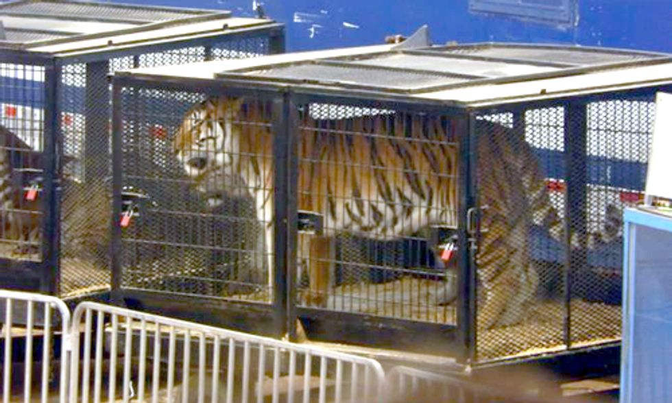Circus Ban Legislation Key in Ending Animal Abuse