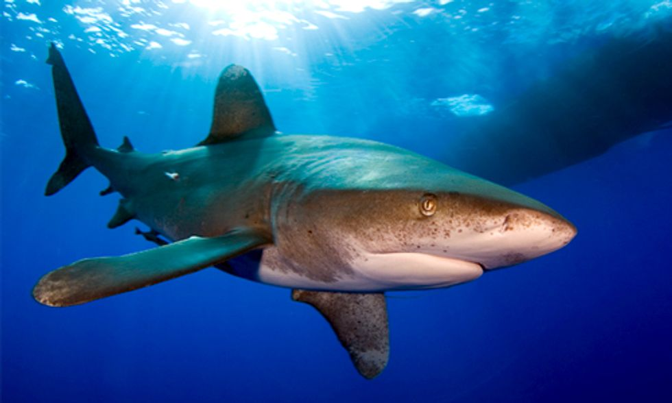Shark Day: A Critical Turning Point for the Survival of Sharks