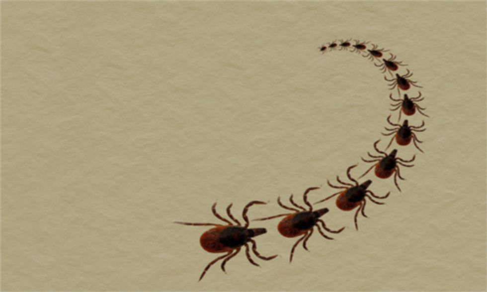 Climate Change Linked to Spread of Lyme Disease