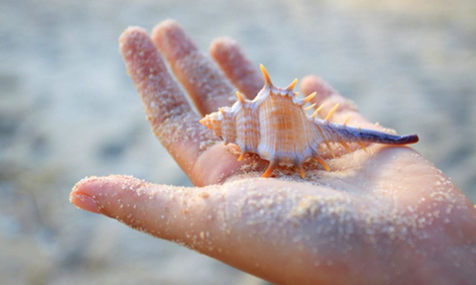 The Environmental Cost of Collecting Seashells