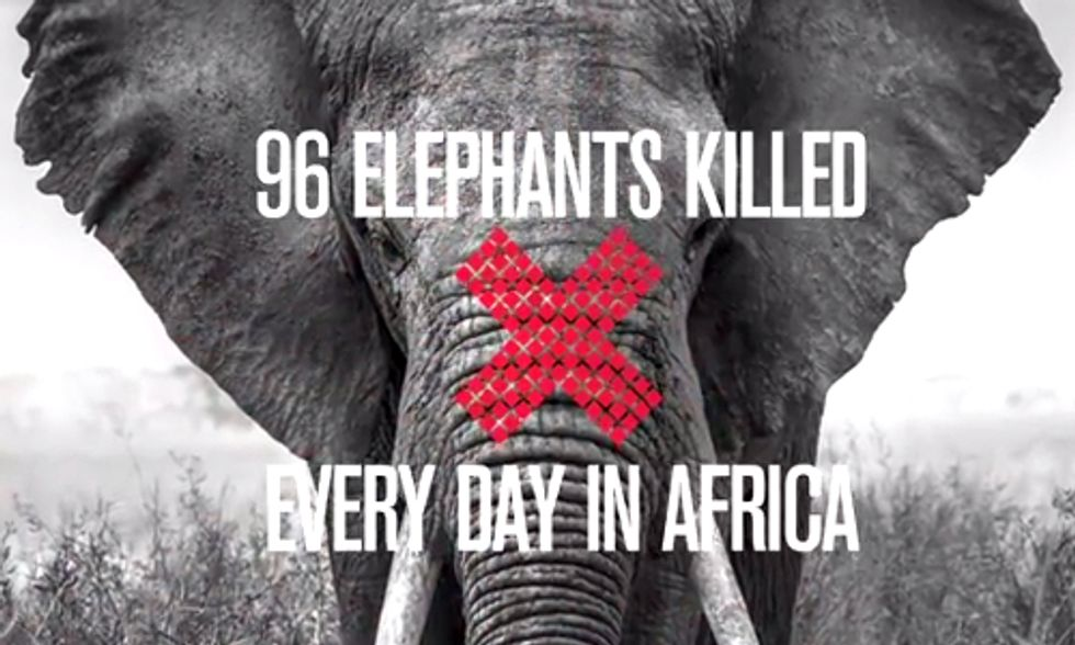 New York to Hold Hearing on Ivory Trade Laws and Elephant Poaching