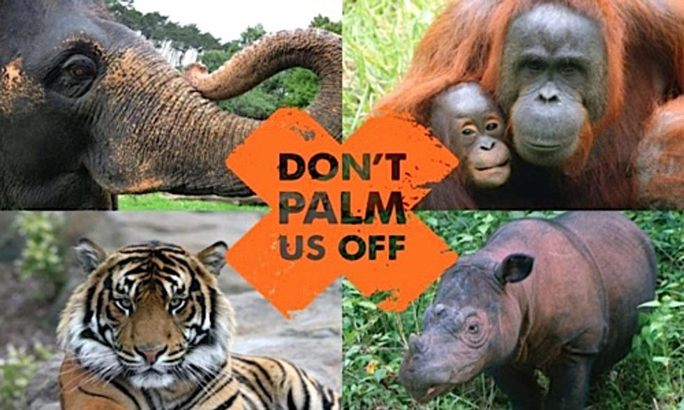 Palm Oil Company Ordered to Pay $30 Million for Illegal Rainforest Destruction