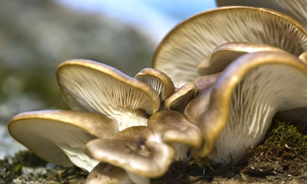 Mushrooms Used for Bioremediation to Clean Pesticides From Oregon Waterways