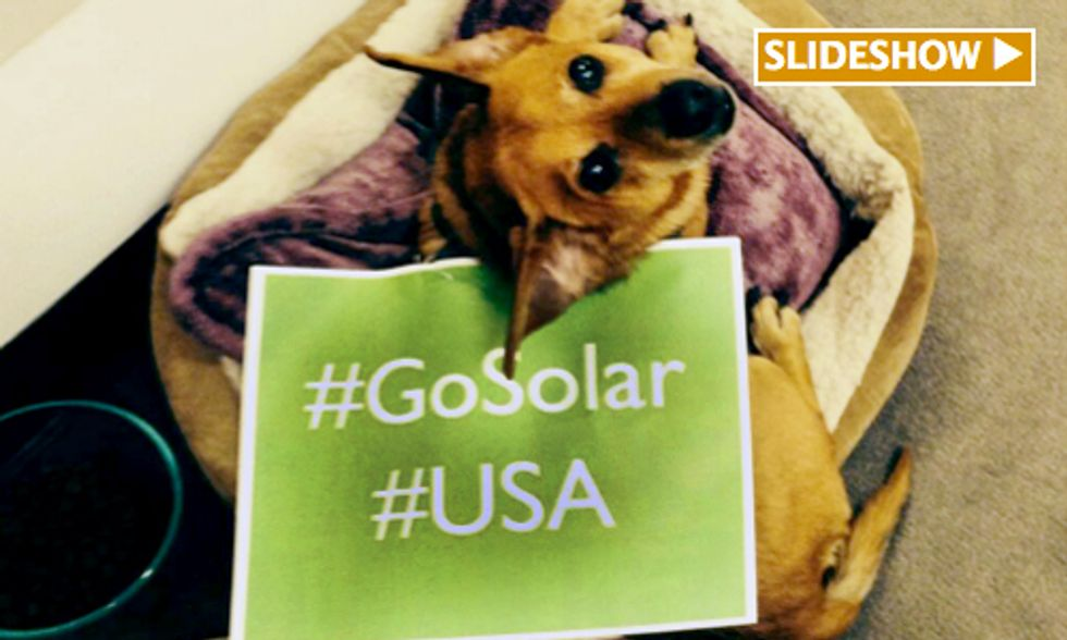 Thousands Participate in 'Shout Out For Solar' Day