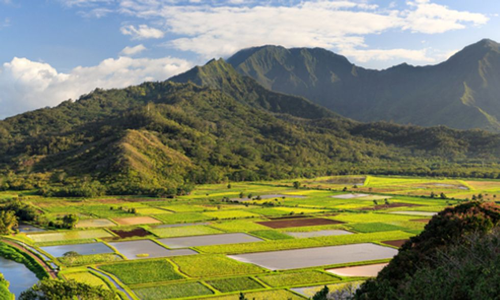 Hawaii Introduces Bill to Block Local GE and Pesticide Bans