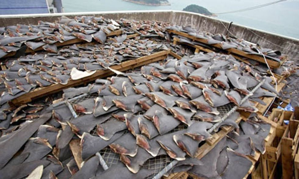 Conservation Group Exposes World's Biggest Shark Slaughterhouse