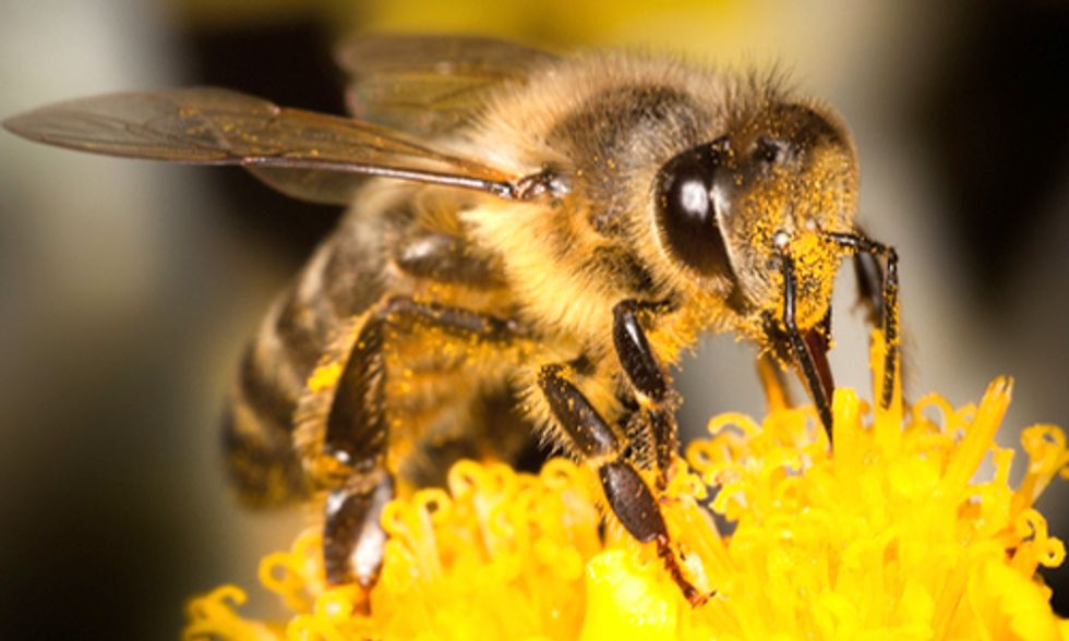 EPA Approves Another Pesticide Highly Toxic to Bees