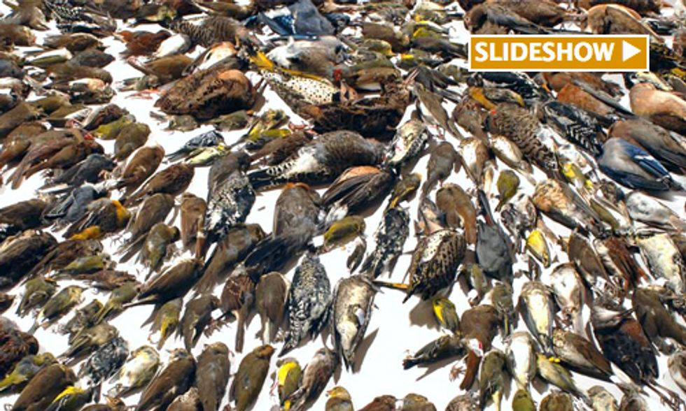 Study Finds Up to One Billion Birds Killed in Building Collisions Each Year
