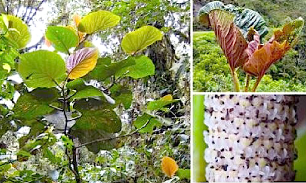 Newly Discovered Plant Supports 50 Different Species