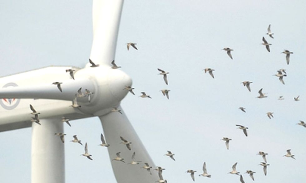 Advocacy Groups Say 1,000 Wind Turbine Project Could Cause Eagle Deaths