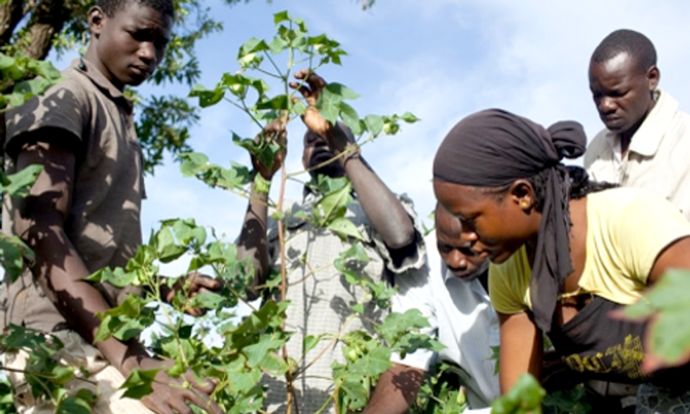 3 New Studies Show Benefits of Eliminating Pesticides on Cotton Fields