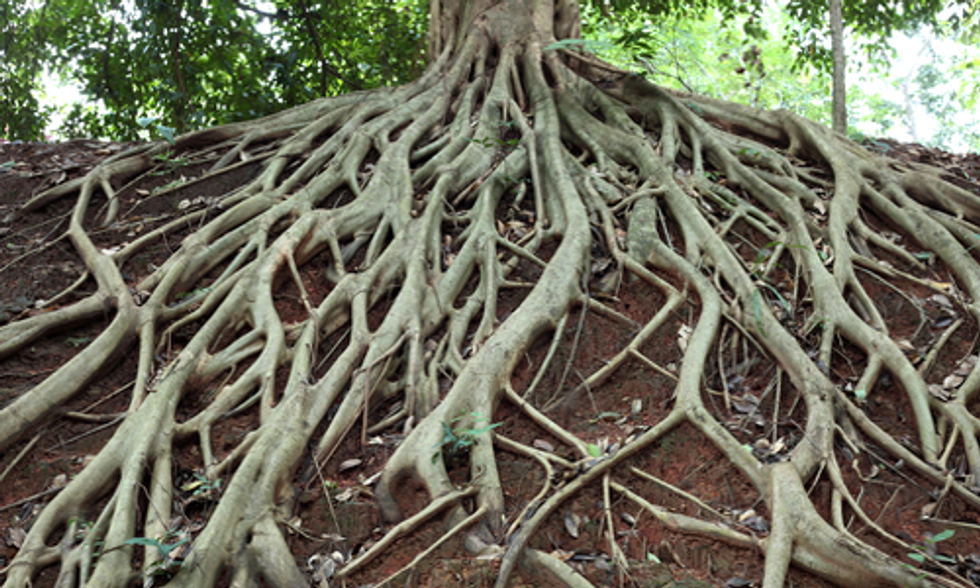 New Research Shows Tree Roots Regulate CO2, Keep Climate Stable