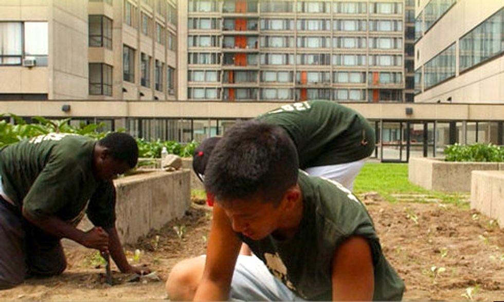 10 Urban Farming Projects Flourishing in Boston