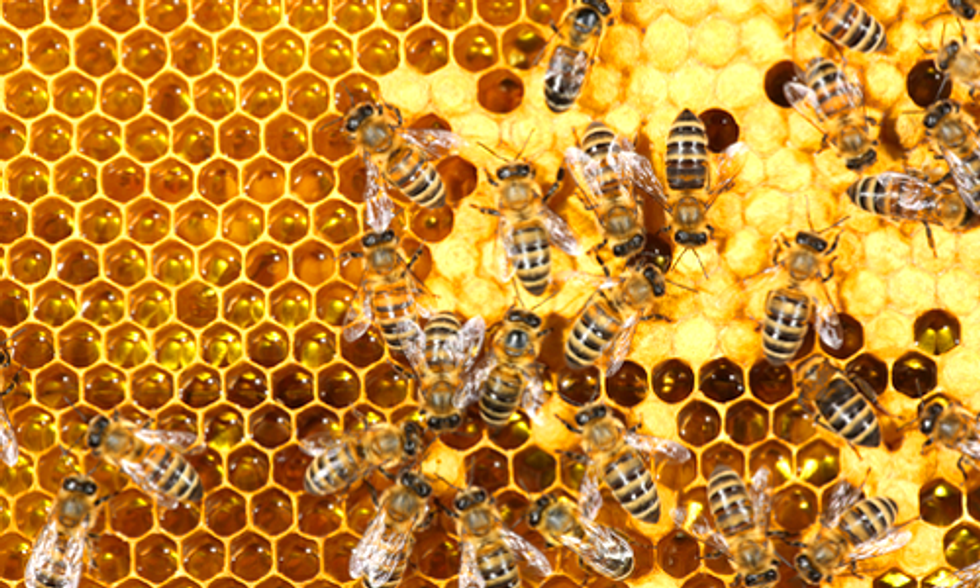 Scientists Discover Two Fatal Diseases Capable of Transmitting From Honey Bees to Bumblebees