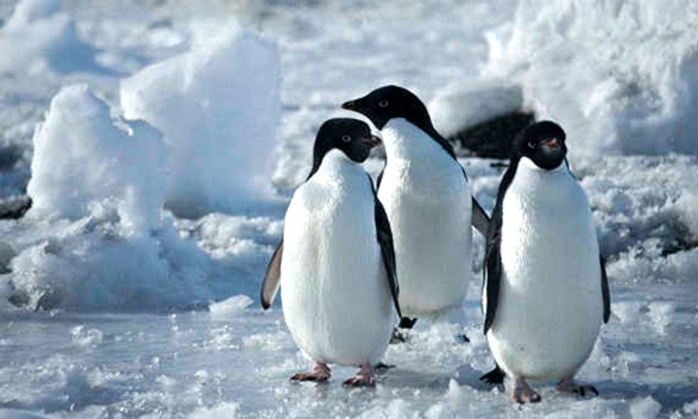 Documentary Spotlight: Antarctica, A Year on Ice