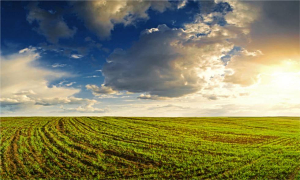 USDA Policy Fails to Address GMO Contamination of Organic Crops