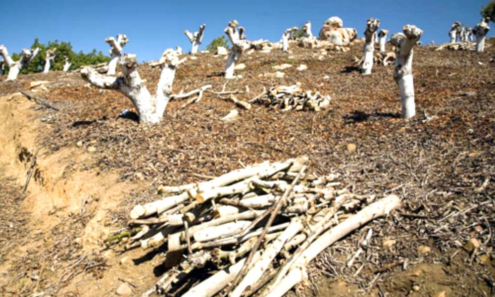 Hundreds of California Businesses Band Together in Face of Devastating Drought