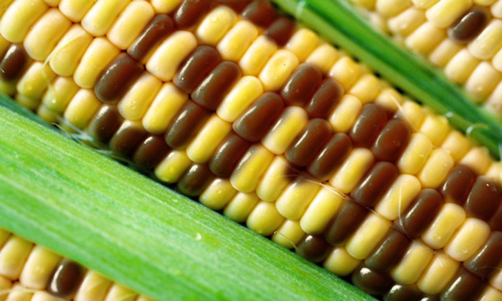 California Senator Introduces GMO Food Labeling Bill