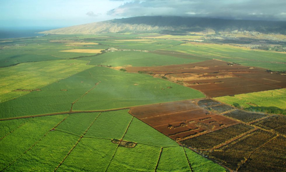 Petition Launched to Halt GMO Production, Pesticide Use in Hawaii