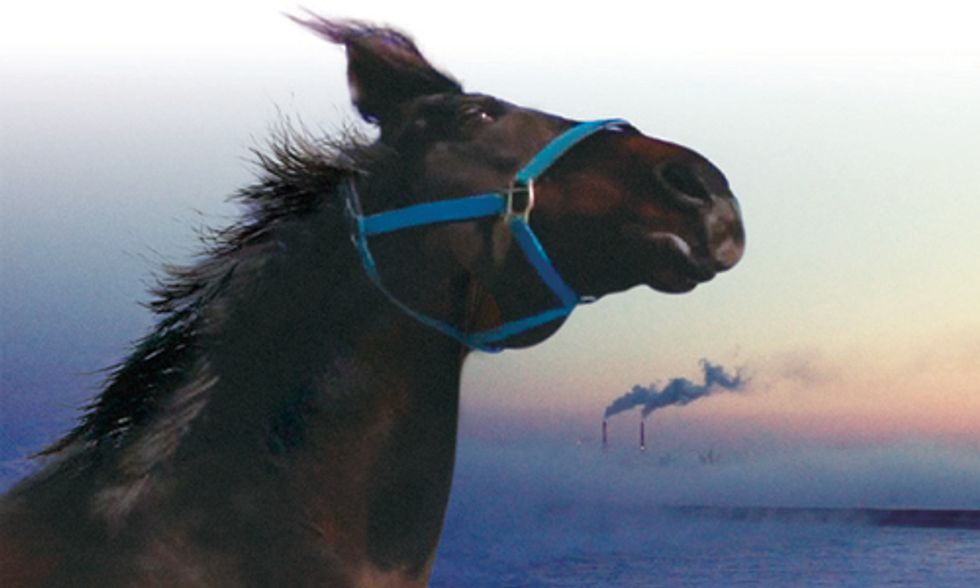 Documentary Spotlight: The Horses of Fukushima