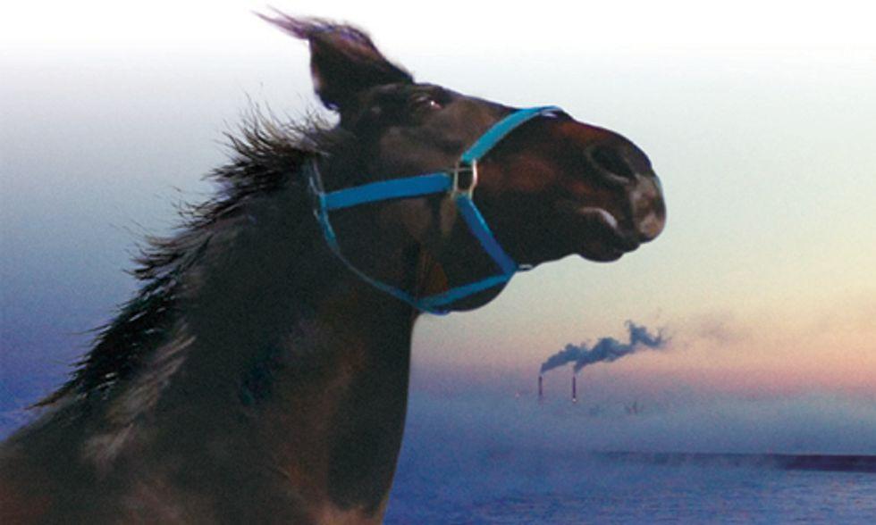 Documentary Spotlight: The Horses of Fukushima