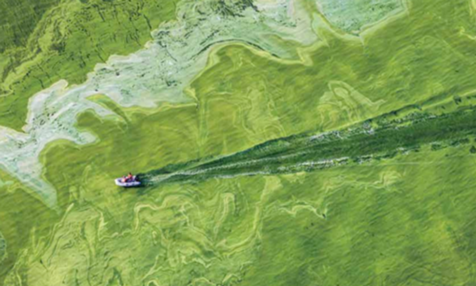 International Panel Recommends Nutrient Diet to Battle Toxic Algal Blooms in Lake Erie