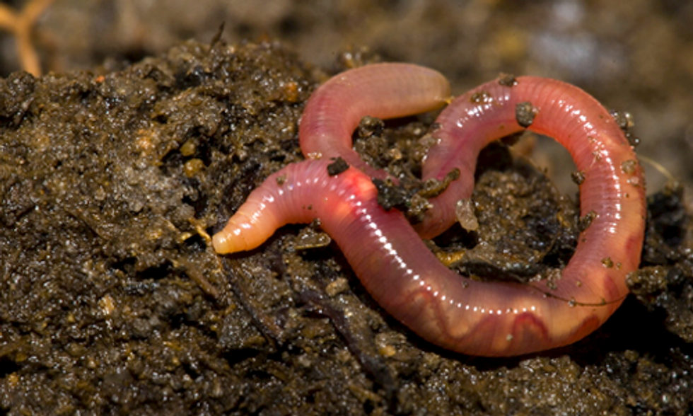 10 Interesting Facts About Earthworms