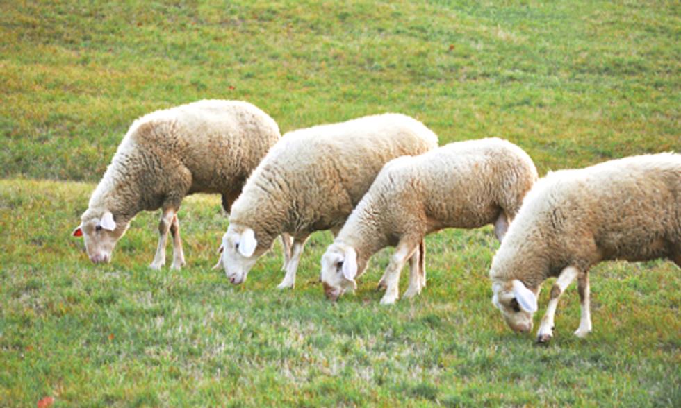 Grazing Animals Could Save Biodiversity in Over-Fertilized Grasslands Worldwide