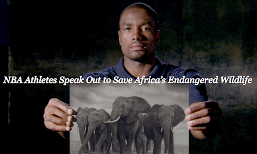 NBA Athletes Launch Campaign Against Ivory and Rhino Horn Poaching