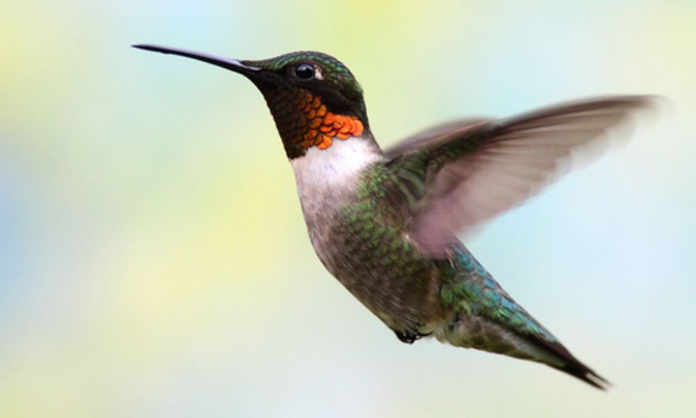 Top 10 Ways to Help Birds This Spring