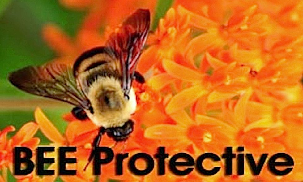 Half a Million Americans Urge EPA to Protect Bees
