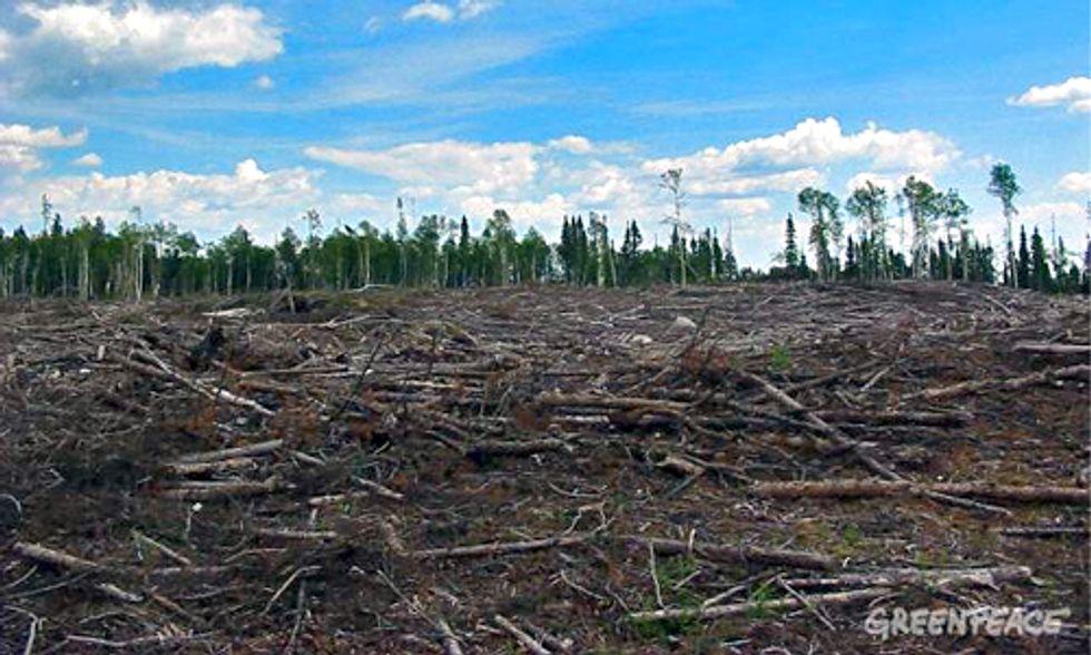 5 Deforestation Hotspots Flying Under the Radar