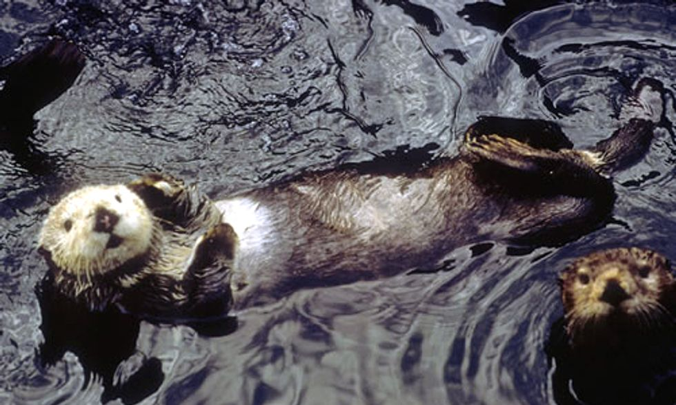 25 Years After Exxon Valdez: 'It's Worse Than We Thought'
